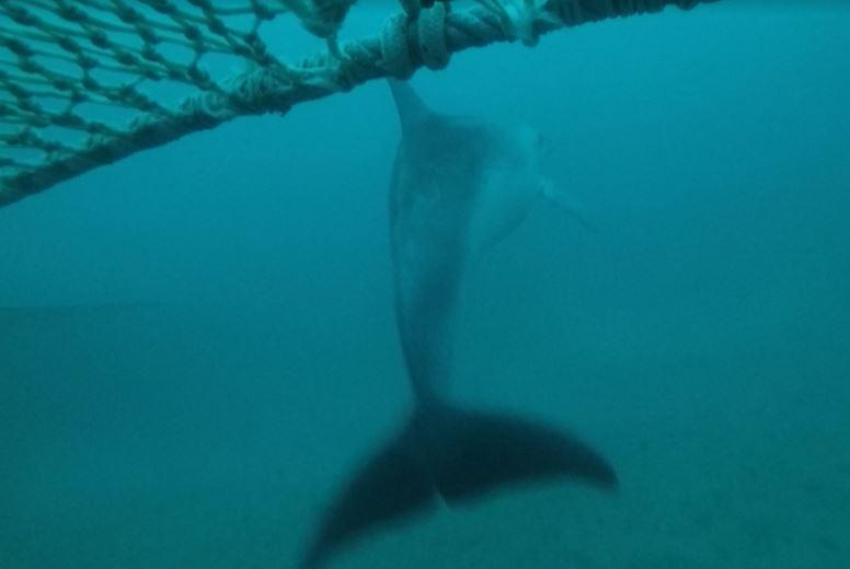 Salvare i delfini senza danneggiare i pescatori - Greenreport: economia ecologica e sviluppo sostenibile